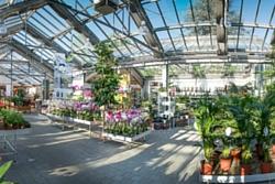 Kottal Blumen + Pflanzen – Thomas Kottal e.K.